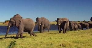 Botswana - Africa