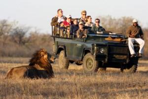 Kruger Wildlife Park