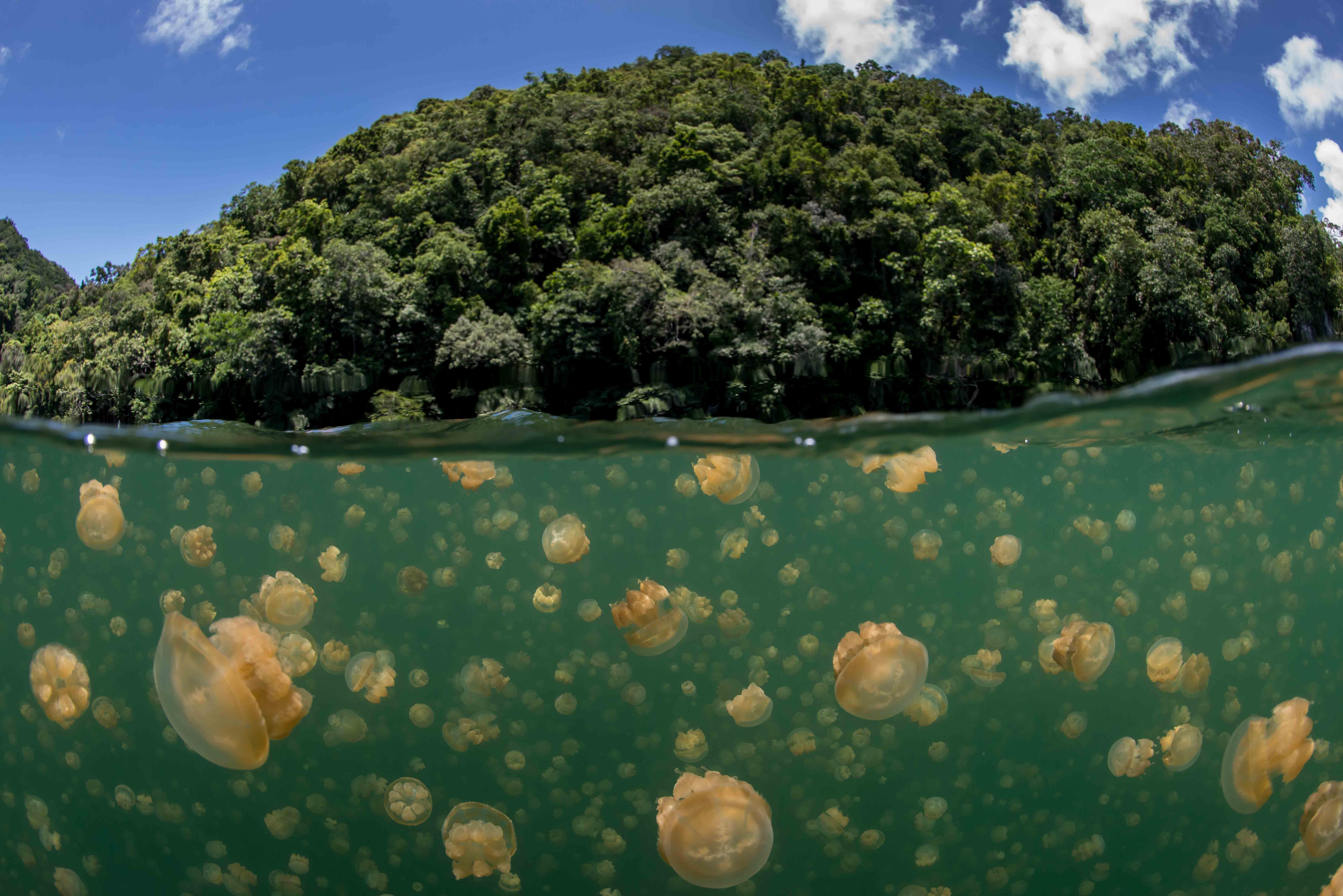 Jellyfish lake marine adventure for Long island sound fishing spots