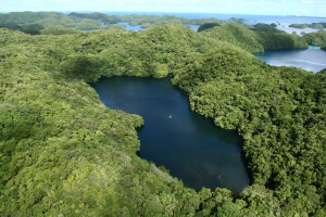 Jellyfish Lake aerial View