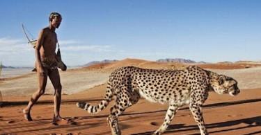 South Africa animal safari kenya animal safari tanzania dangerous leopard cheetah animal safari