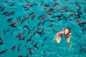Bay-of-sosua-snorkeling-in-puerto-plata