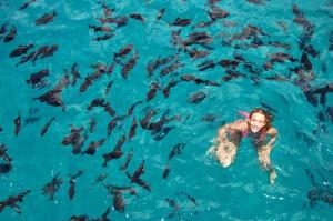 Bay-of-sosua-snorkeling-in-puerto-plata