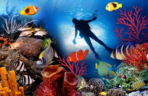 footer_home-300x196 Maldives - The Adventurous destination for Nature Lovers
