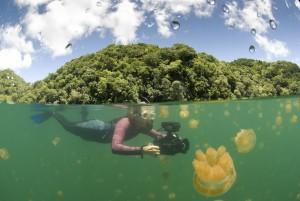 Swimmer with video camera, Jellyfish Lake, Palau
