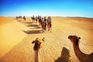 Camel Rides In The Deserts