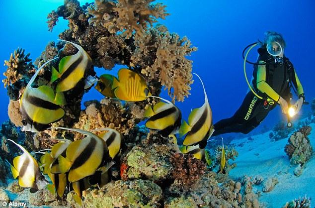 Deep Sea Diving Adventure