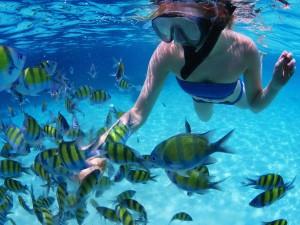 3-1-300x225 Barbados: Tropical Restoration