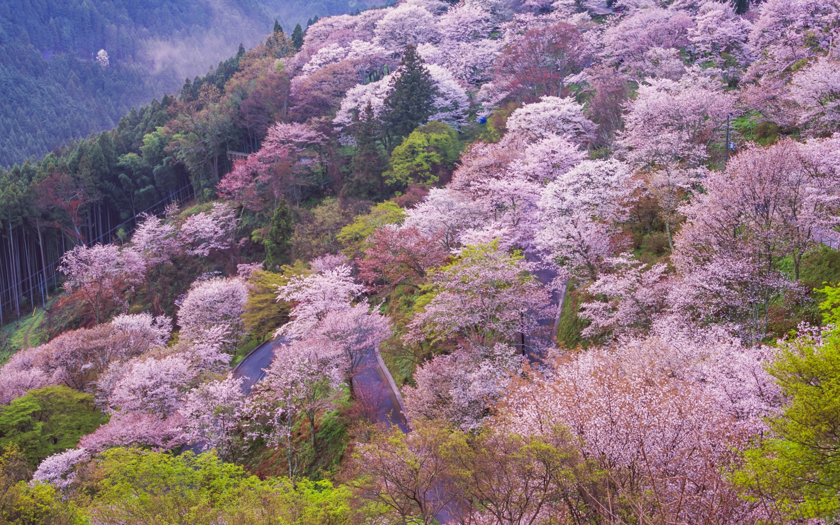 Top 3 Hiking Trails In Japan Hooked On Everything