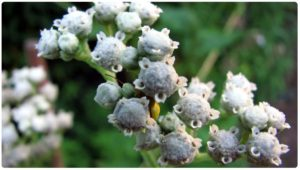 quinine-300x170 COVID-19: Everything you need to know about it