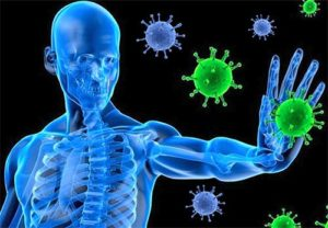 The Immune System of a Person